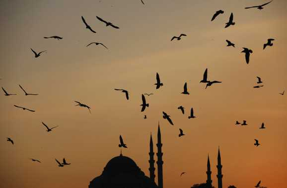 Seagulls fly over Golden Horn as the sun sets over the Ottoman-era Suleymaniye Mosque in Istanbul