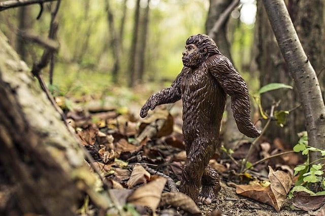 bigfoot-542546_640