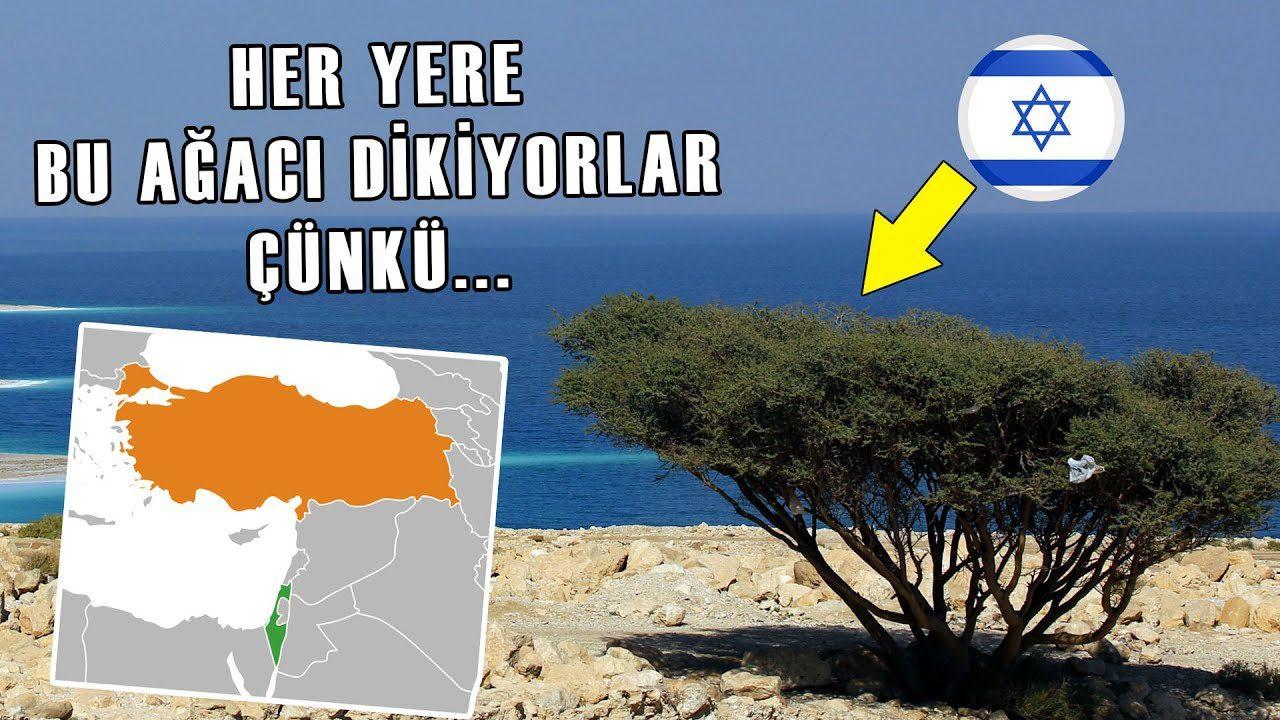 İsrail, Türkiye Yüzünden Bu Ağacı Dikiyor