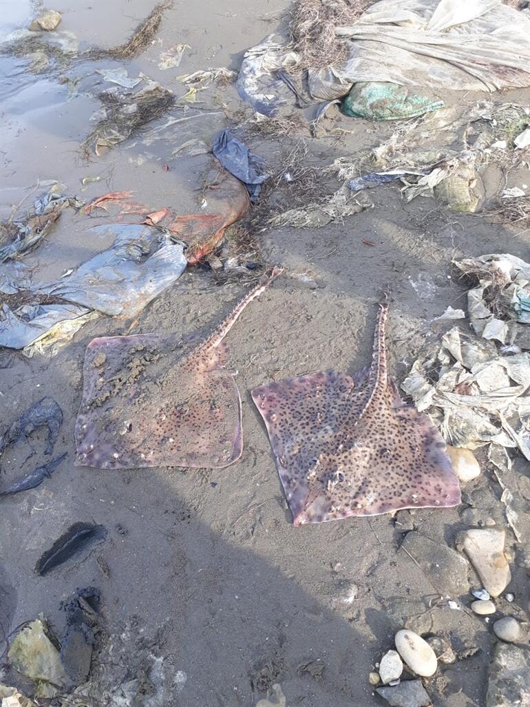 Şaşırtan görüntü Kıyıya vurdu... Tehlikeli ve öldürücü...