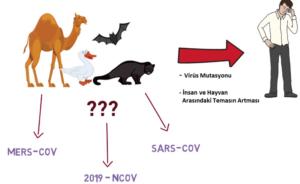 corona-virus-nereden-geldi