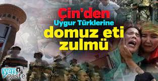 Çin'den Uygur Türklerine domuz eti zulmü - Yeni Gaste | Haber, Gazete, Son  Dakika Haberler, Haberler - Mobil